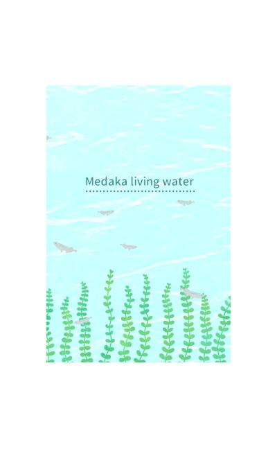 Medaka living water