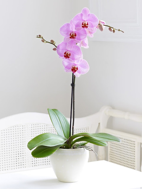 Decorate Your Interior With Orchids 11