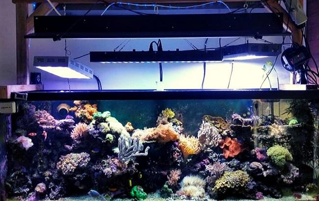 Expose aquarium to lighting