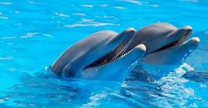Buenas noticias, Canadá prohíbe el cautiverio de delfines y ballenas para fines de entretenimiento