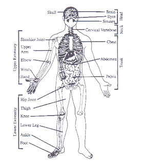 Learn First Aid: Anatomy and Physiology