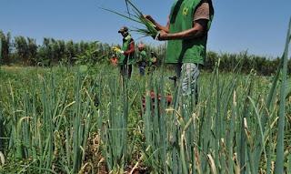 Ministério da Agricultura libera R$ 74 milhões em recursos do Garantia-Safra