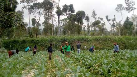 Petani Dibantu Relawan Panen