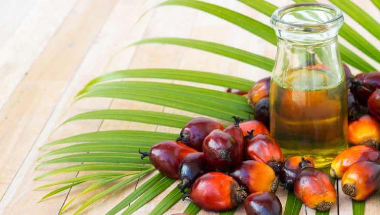 kaya-vitamin-e-minyak-sawit-dapat-memperkuat-sistem-kekebalan