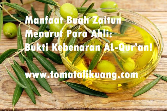 manfaat buah zaitun menurut para ahli; manfaat buah zatun dalam al quran; penelitian buah zaitu; tomatalikuang.com