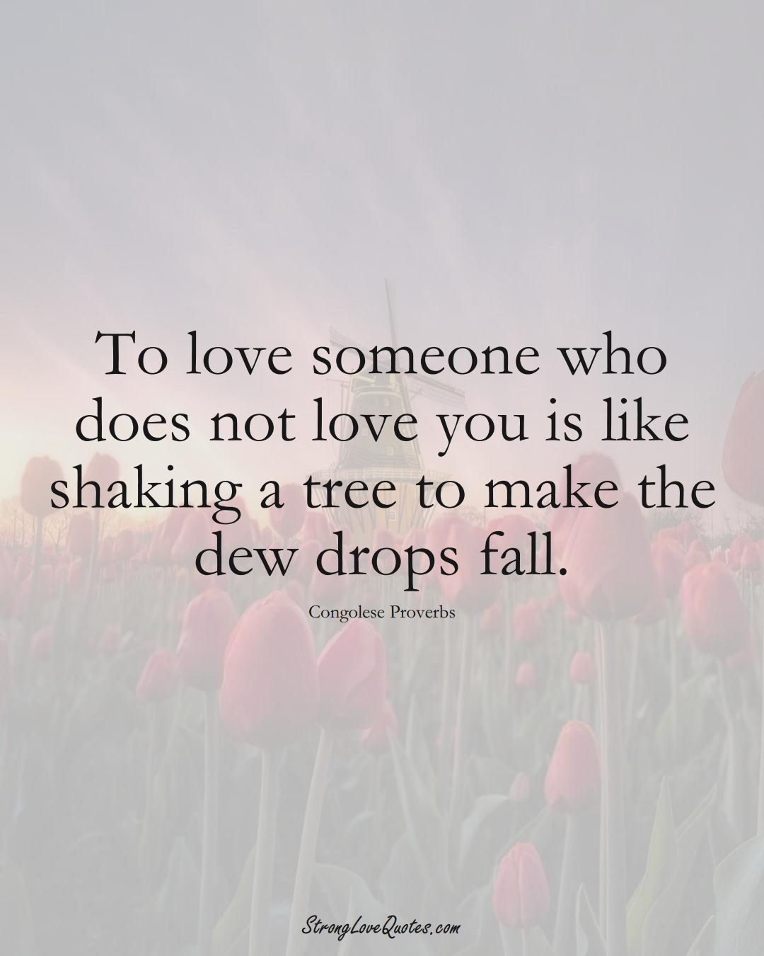 To love someone who does not love you is like shaking a tree to make the dew drops fall. (Congolese Sayings);  #AfricanSayings