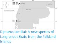 https://sciencythoughts.blogspot.com/2019/08/dipturus-lamillai-new-species-of-long.html
