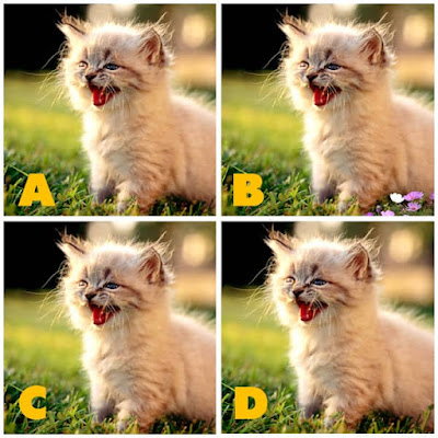 Quiz Diva - Kitty Difference Answers 40 Questions Score 100% image 41