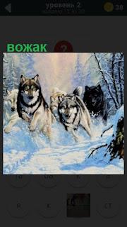 бегут собаки и во главе вожак стаи