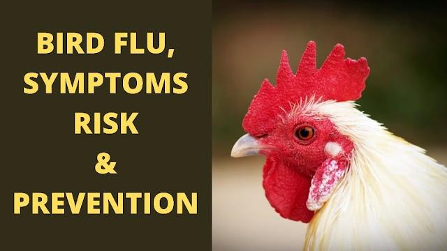 BIRD FLU | BIRD FLU SYMPTOMS | BIRD FLU SPREAD AND RISK | PREVENTION