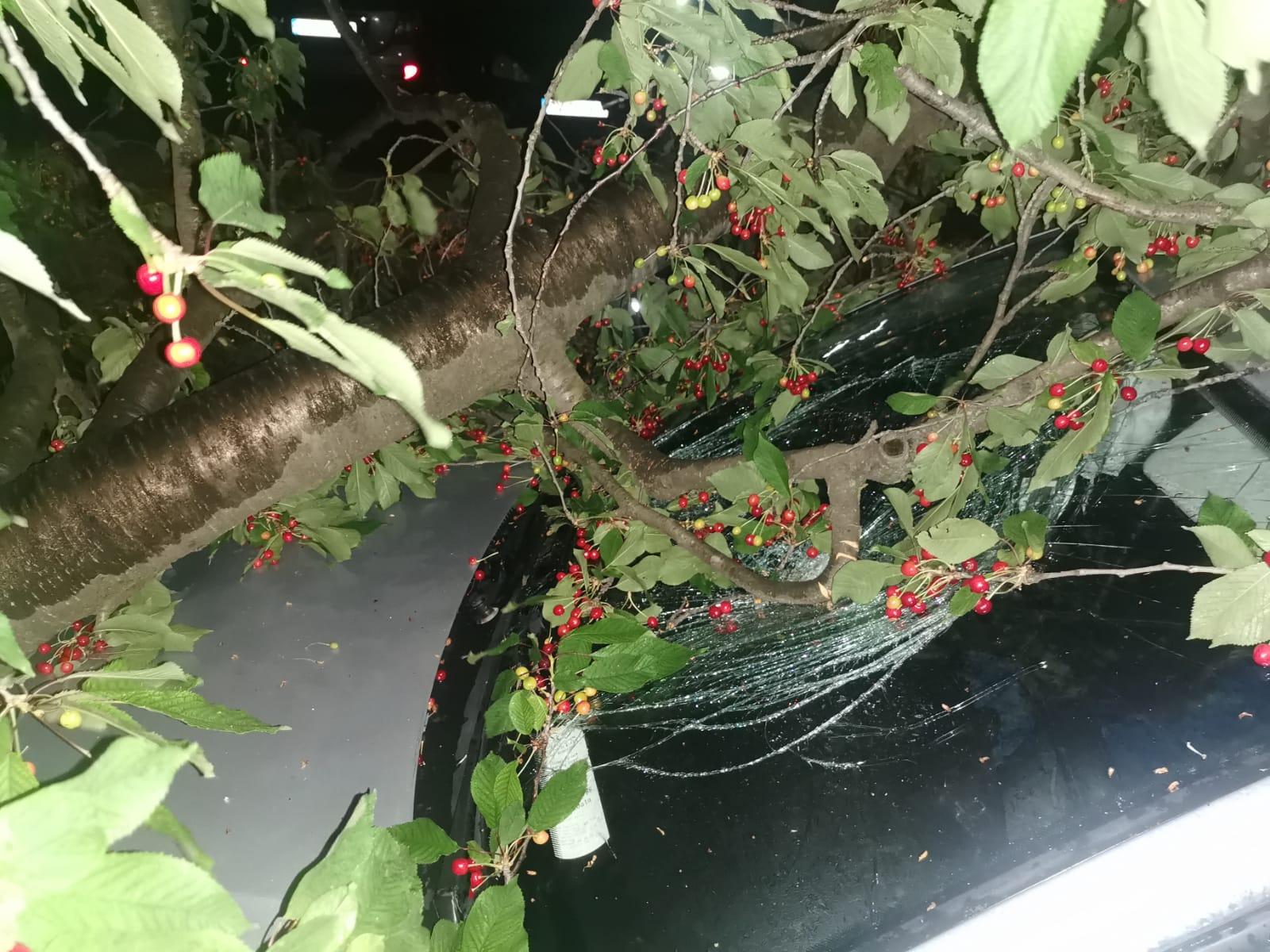 Arbore căzut mașină Suceava
