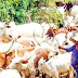 FG replaces controversial RUGA with new scheme, begins camps in six states - One of these states will shock you