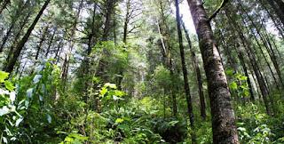 Continúa abierto concurso nacional de fotografía forestal
