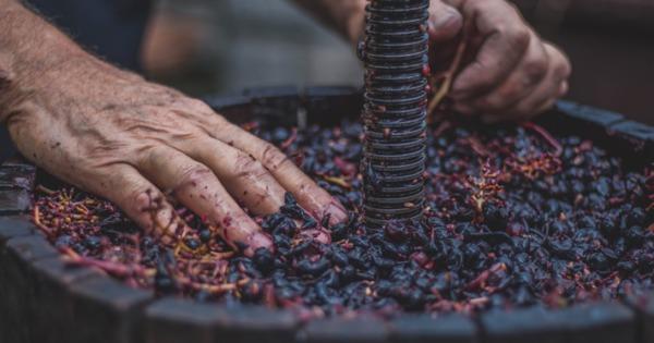 Atenție la procesul de fermentare a vinului