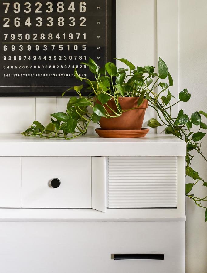 Thriving pothos plant