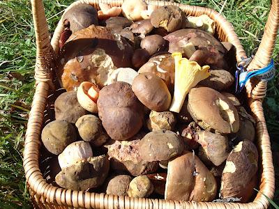 grzyby 2018, grzyby we wrześniu, grzyby na Orawie, borowiki, koźlarze, mleczje, muchomory, pierwsze przymrozki, impreza urodzinowa w Lipnicy