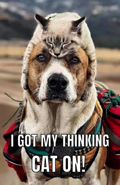 Funny Dog Meme - Funny And Hilarious Dog Photos - The Best