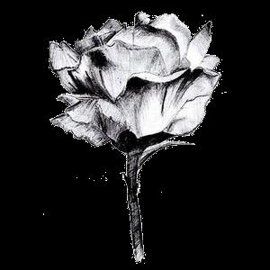 مكتبة سكرابز العرب اجمل سكرابز الورود للفوتوشوب والتصميم