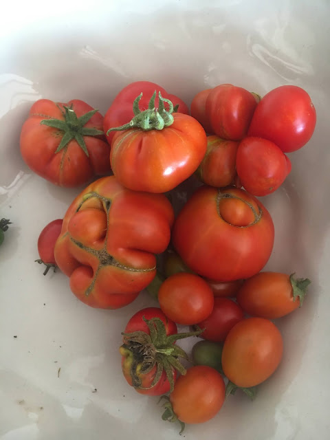 Home Grown Cherry Tomatoes and Reisetomates