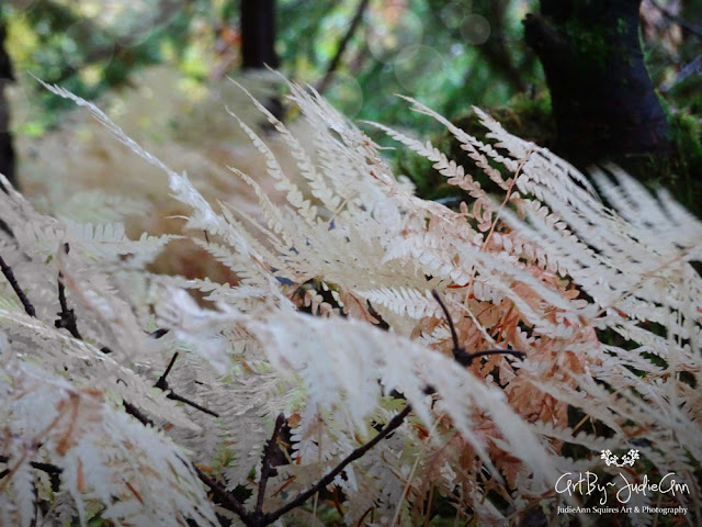 White & Pink Ferns Photography