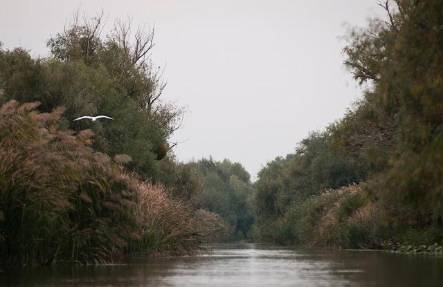 Toamna adevarata pe canalul principal la Parches