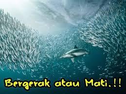 Belajar dari Ikan Salmon dan Hiu
