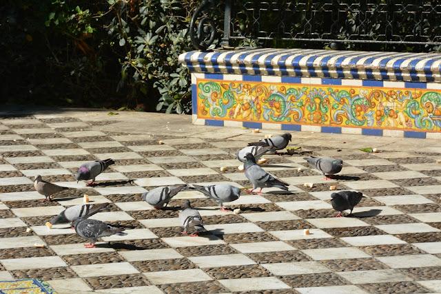 Alameda Apocada Gardens Cadiz pigeons