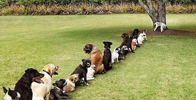 Η τουαλέτα σκύλων που…καθαρίζεται μόνη της!
