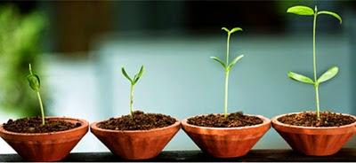 QSN: Cambiar de alimentación es como la llegada de la primavera