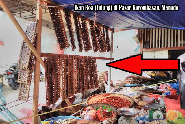 Peluang Bisnis Ikan Roa (Julung) di Manado
