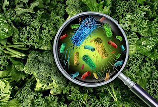 Phages can be used to decontaminate bacteria in food