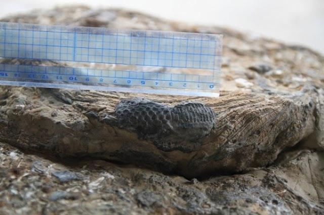 Dấu chân người tí hon trên phiến đá cổ đại 600 triệu năm tuổi