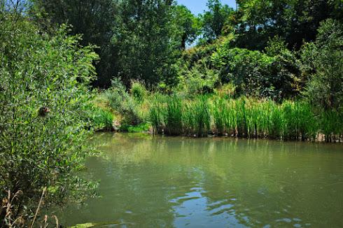 El rio Vero