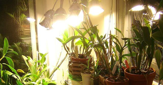 Types of Lights for Plant Growth - Floriculture Care - House Plants