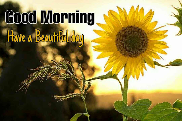 Awesome good morning image with sun flower have a beautiful day