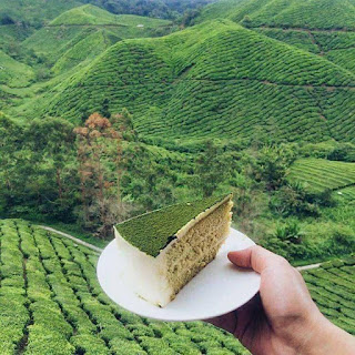 kek green tea cameron highlands