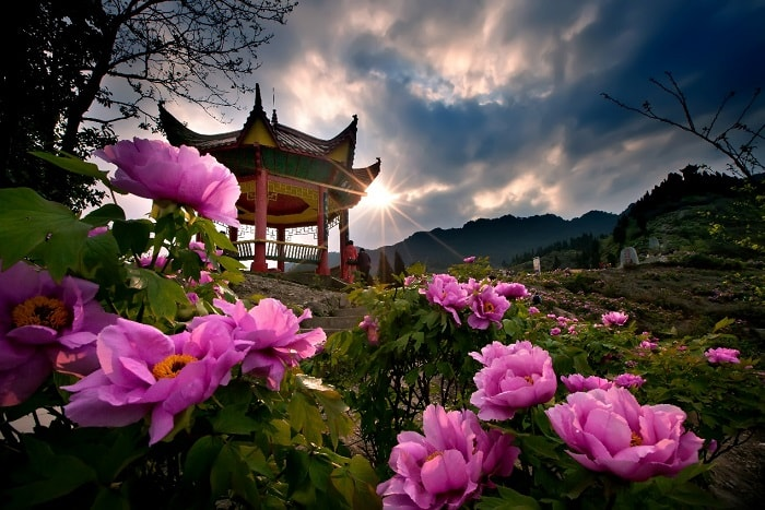 Dianjiang Peony Culture Festival