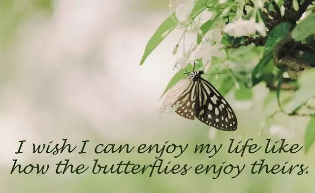 butterfly love quotes and sayings