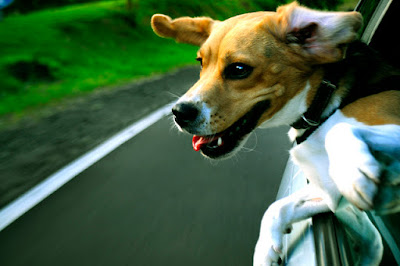 Earth Heart Inc.: Three Crucial Traveling Tips For Happy Tails