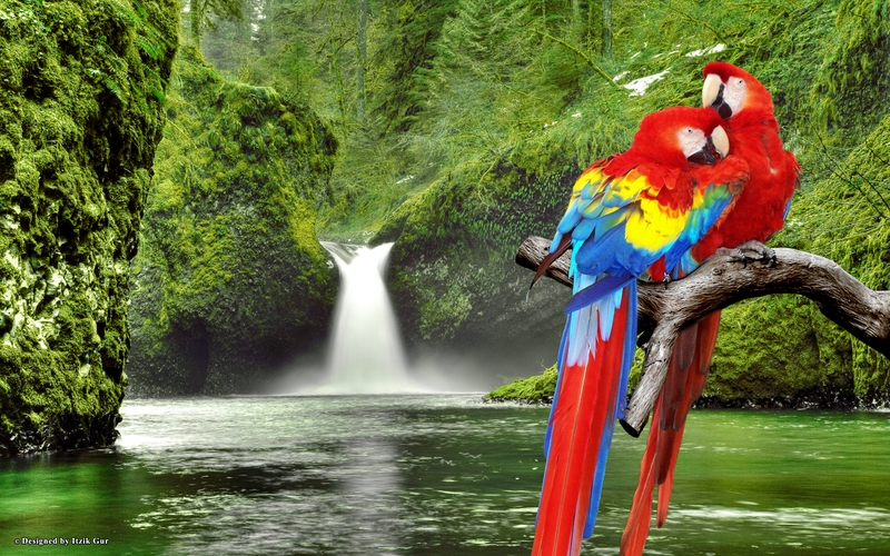 Top 47 most dashing and beautiful parrot wallpapers in hd voltagebd Images