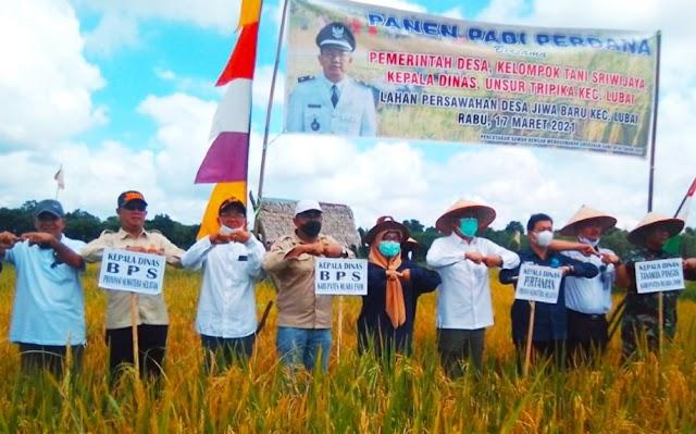 Panen Perdana Desa Jiwa Baru Kecamatan Lubai