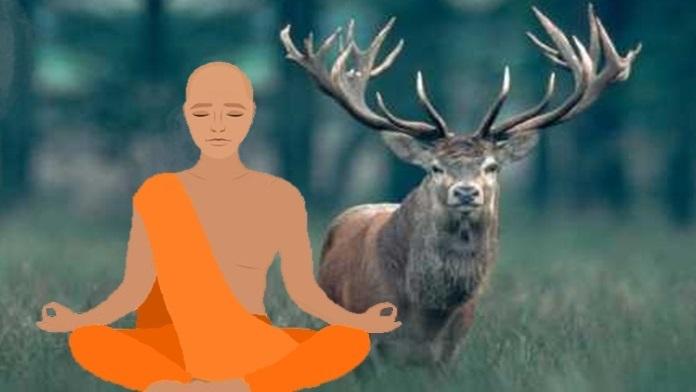 La giornata mondiale degli animali - Buddha