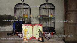 https://www.mysomer.com/2020/02/apakah-warna-untuk-untulan-lovebird-berpengaruh.html