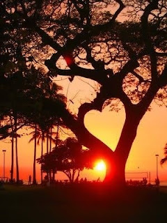 A heart-shaped silhouette in a tree at sunset.