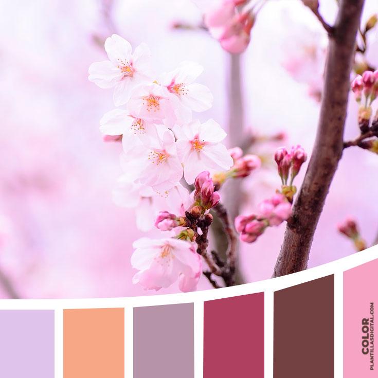 color_598