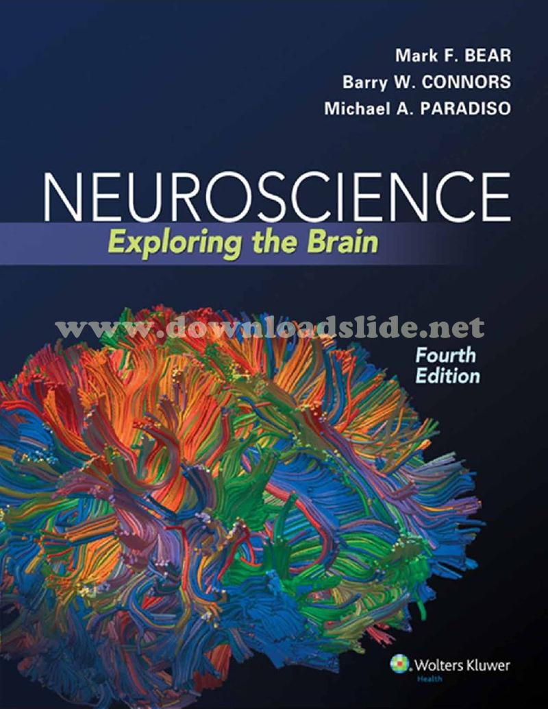 Download ebook human physiology 7th edition by silverthorn global ebook neuroscience 4th edition by b fandeluxe Image collections