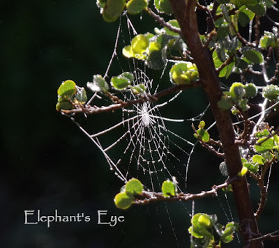 Spiderweb 2010