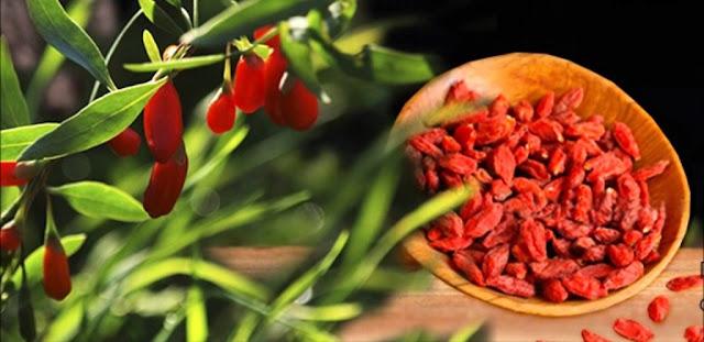 Bổ sung các chất chống oxy hóa trong thực phẩm tốt nhất