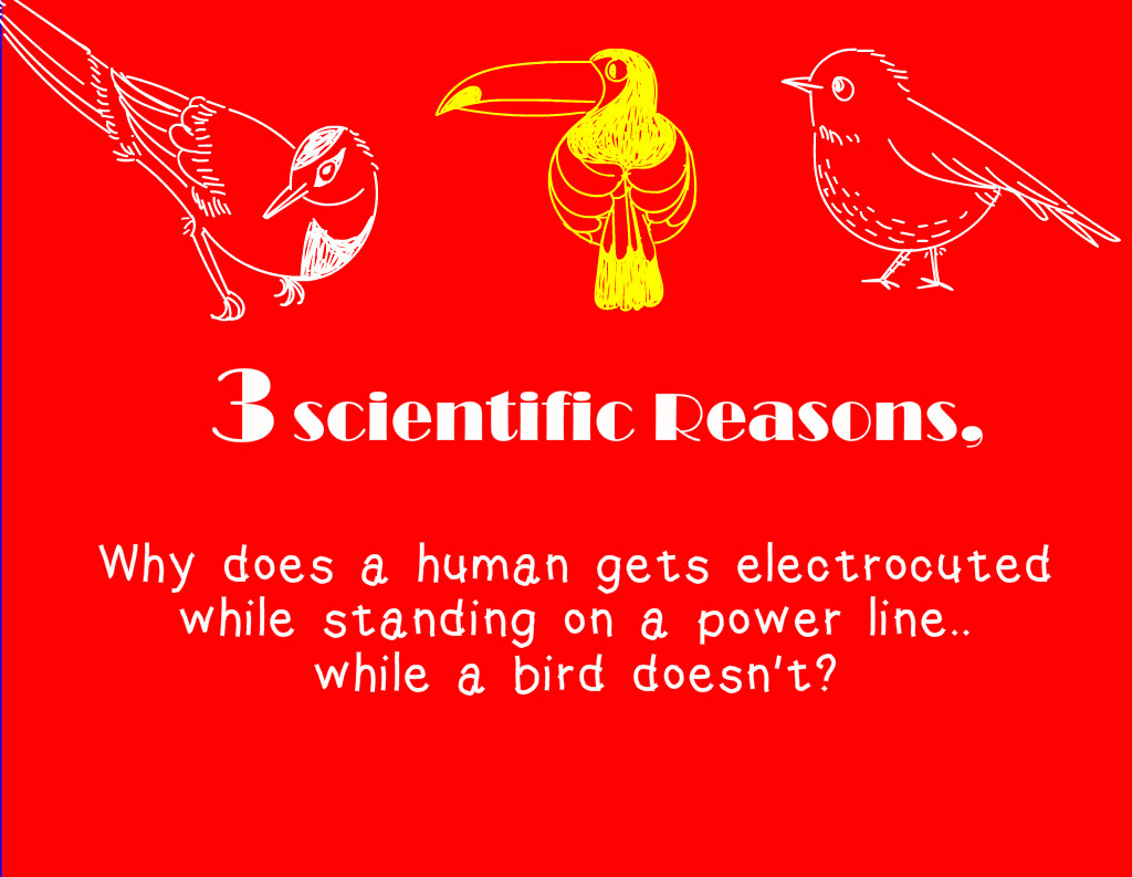 3 Scientific Reasons Why The Birds Are Not Getting Electrocuted When They Sitting On Power Lines