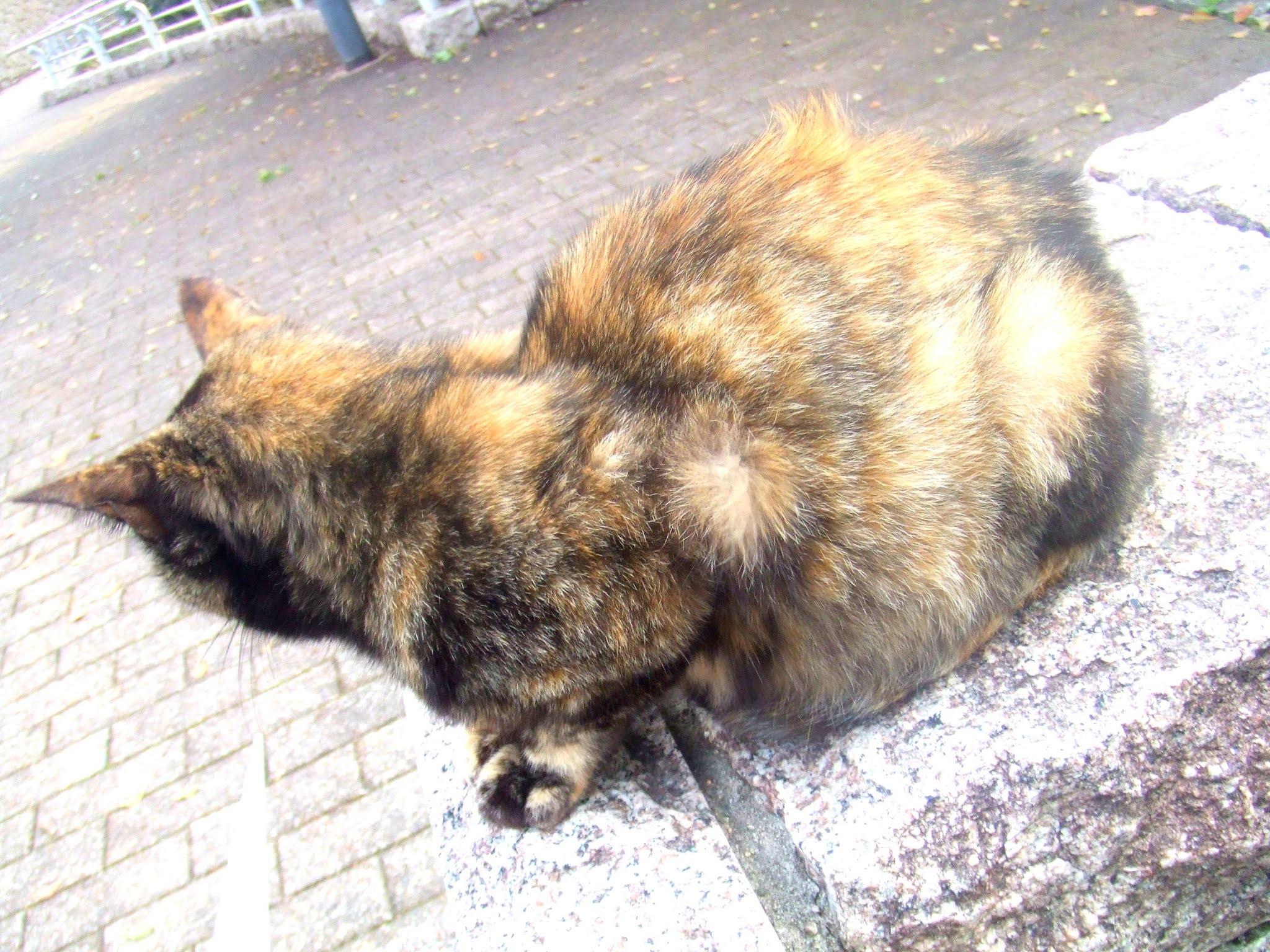 猫さんの全体の写真です。背中を向けているのでちょっと神秘的な感じかも。猫ブログなどにどうでしょう。